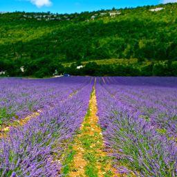 Burgundy July 2014