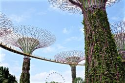 Gardens by the Bay Feb 2015