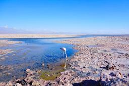 Atacama Desert Feb 2013