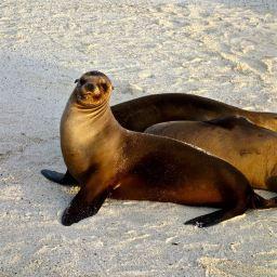 Galapagos Islands Feb 2014