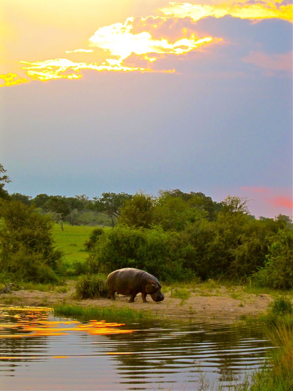 Sabi Sands, South Africa