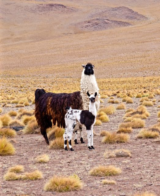 Sioli Desert, Bolivia