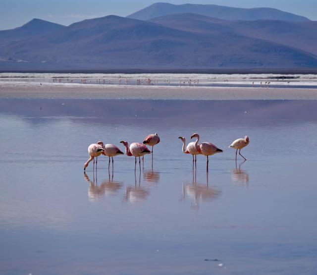 Laguna Coloradat, Bolivia