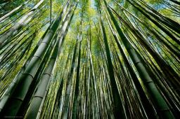 Kyoto: Bamboo Forest & Gion May 2018
