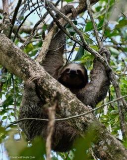 Sloths and Bogarin Trail Feb 2019