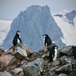Antarctica 10: Half Moon Island Feb 2020